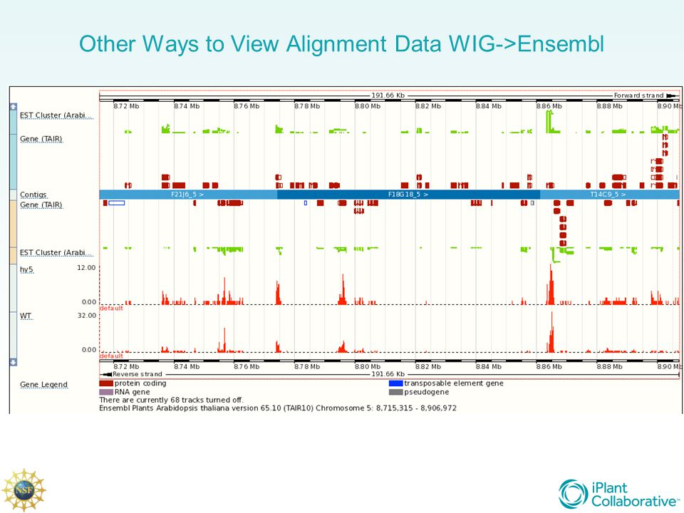 Other Ways to View Alignment Data WIG->Ensembl