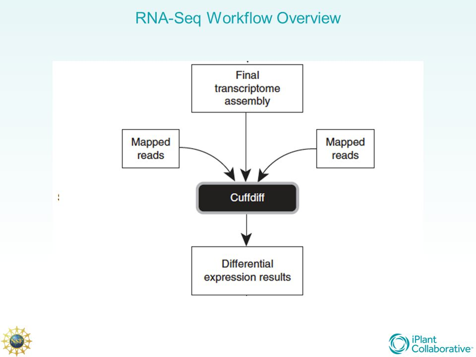 RNA-Seq Workflow Overview