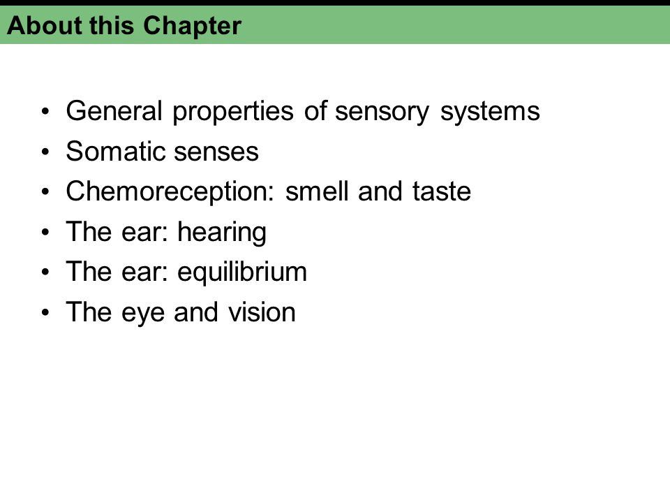 Funky Sensory System Anatomy And Physiology Word Search Model ...