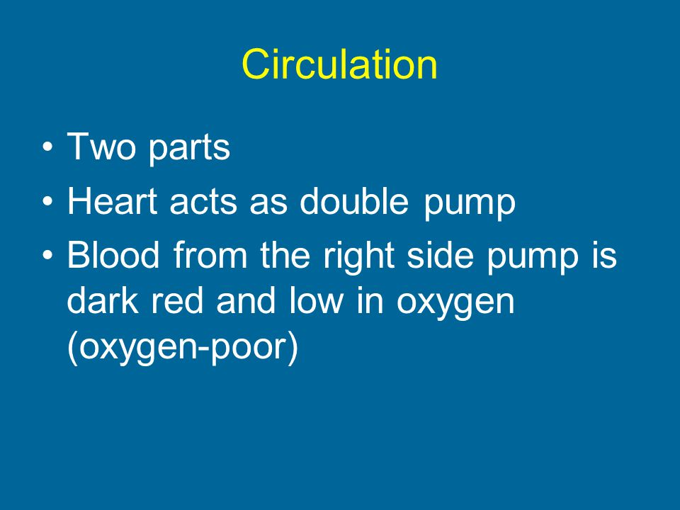 Circulation Two parts Heart acts as double pump