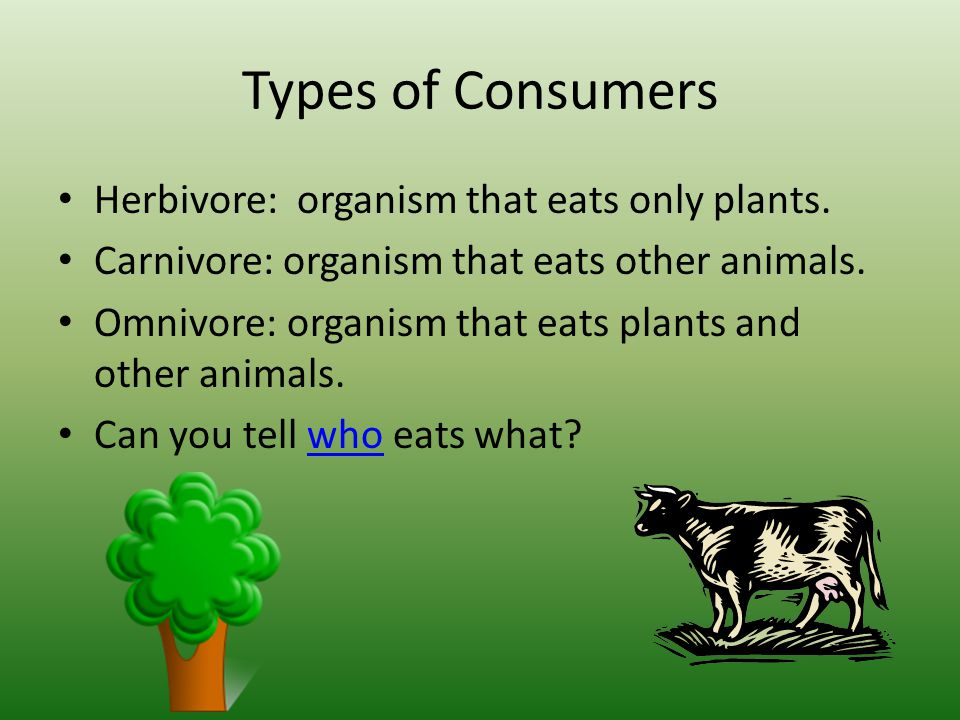 Types of Consumers Herbivore: organism that eats only plants.