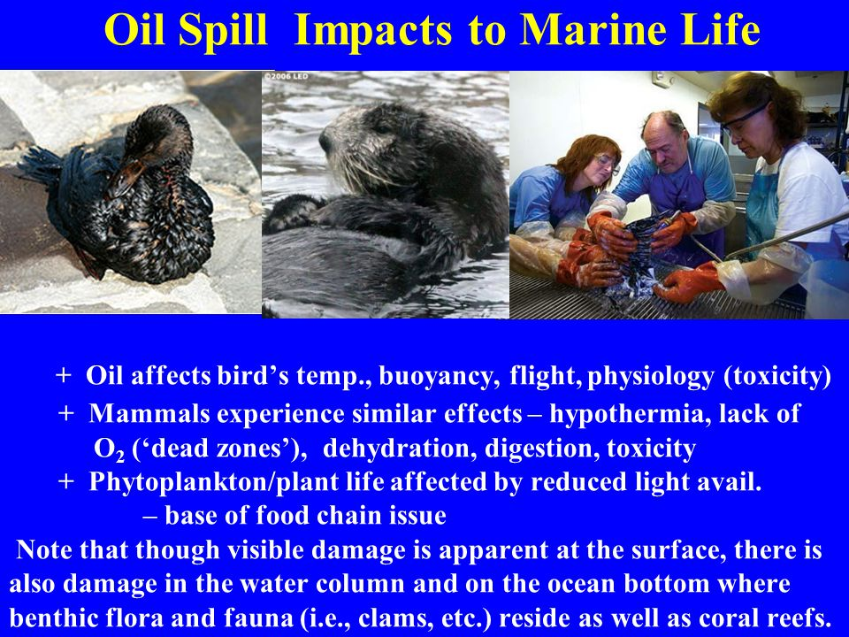 An introduction to the issue of an oil spill