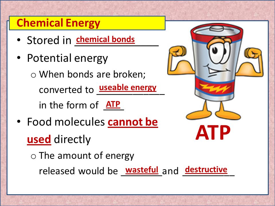 How Is Chemical Potential Energy Stored In Food