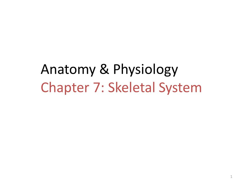 Fantastic Chapter 7 Skeletal System Anatomy And Physiology Model ...