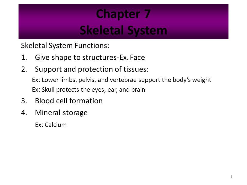 Chapter 7 Skeletal System - ppt download