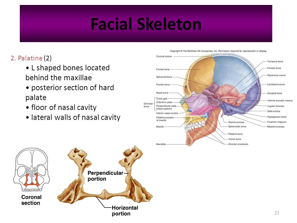 chapter 7 skeletal system - ppt download, Skeleton