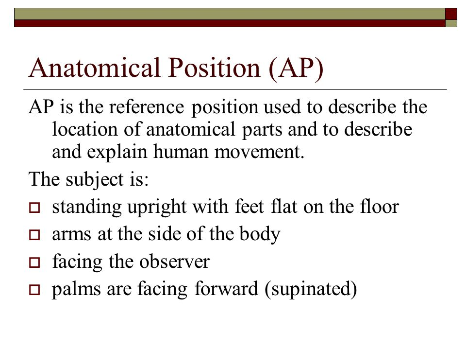 Anatomical Position (AP)