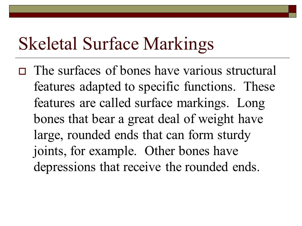 Skeletal Surface Markings