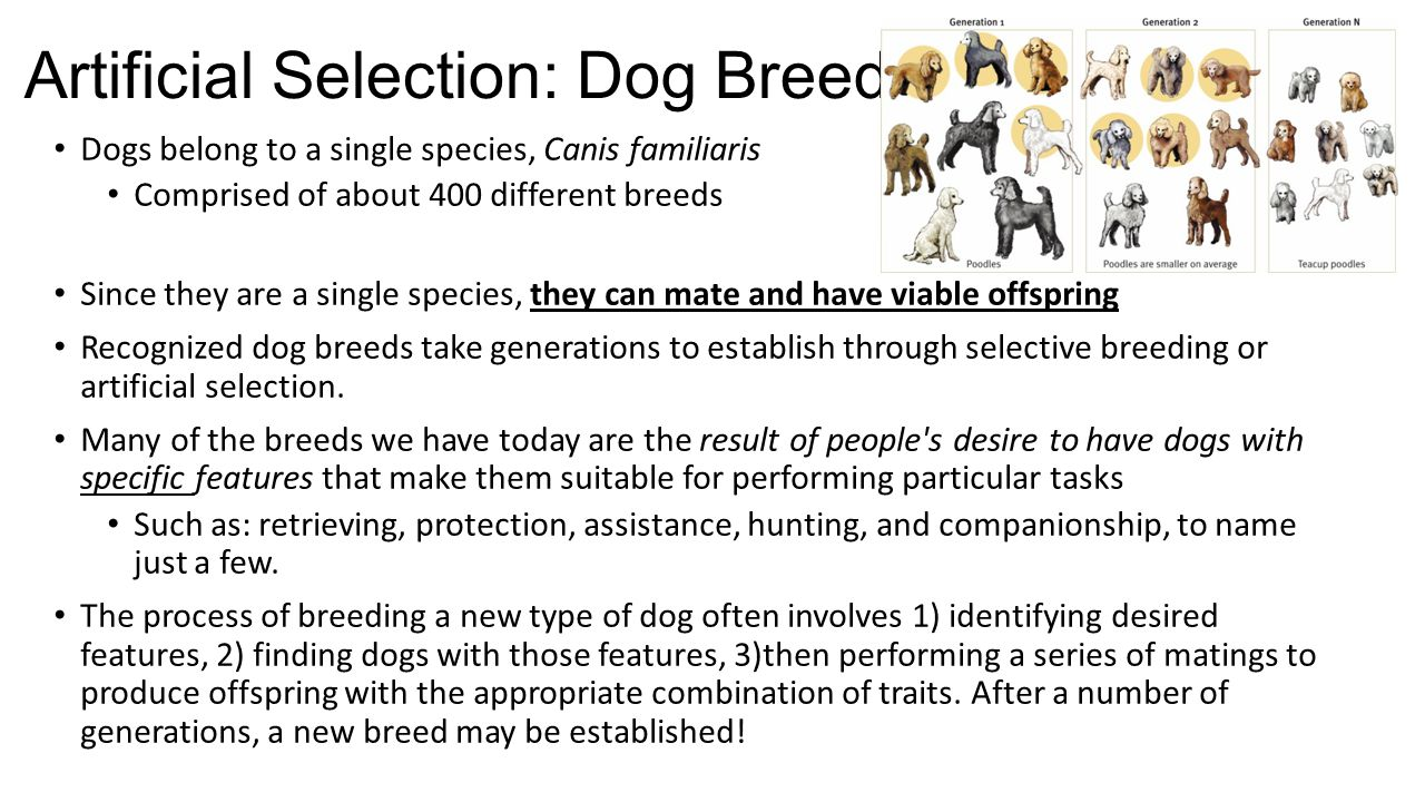 worksheet selective breeding worksheet grass fedjp worksheet study site. Black Bedroom Furniture Sets. Home Design Ideas