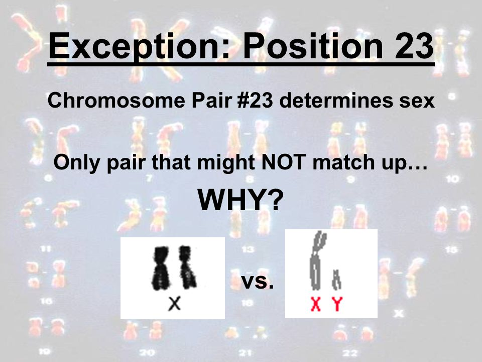 Chromosome Pair #23 determines sex Only pair that might NOT match up…