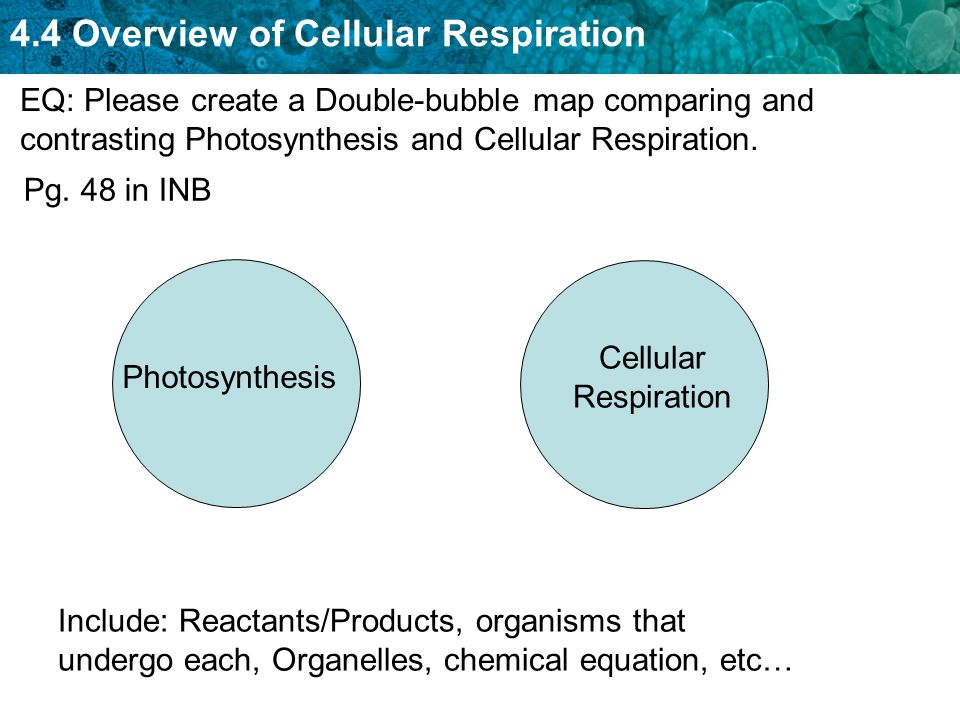 And respiration photosynthesis cellular between difference