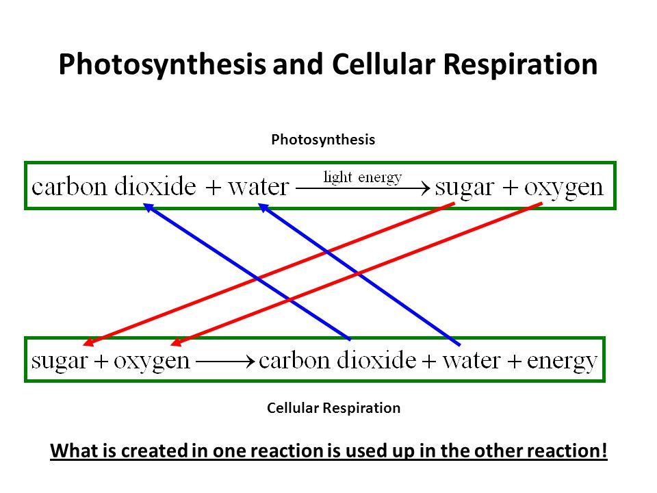 Venn Diagram Comparing Photosynthesis And Cellular Respiration