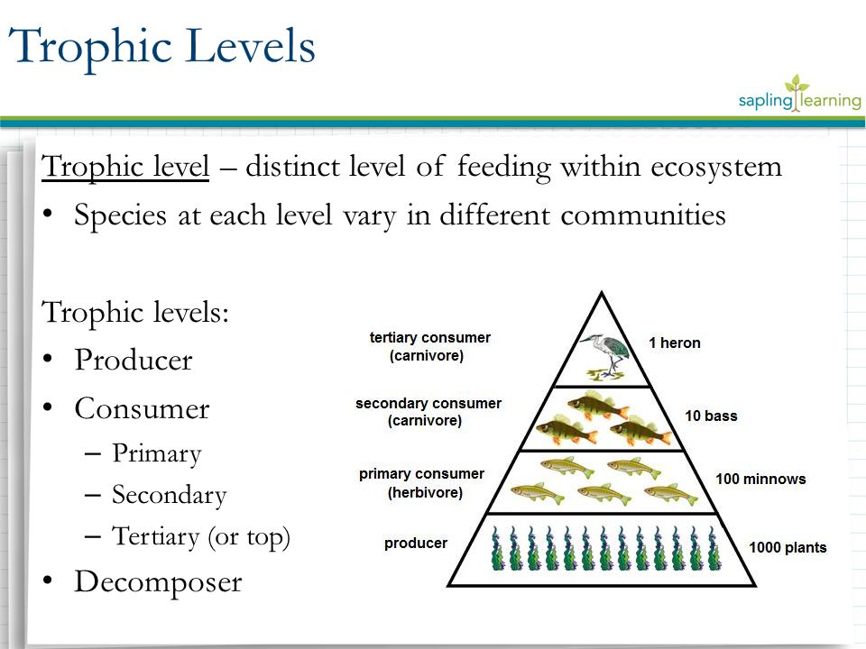 What are the three tropic levels
