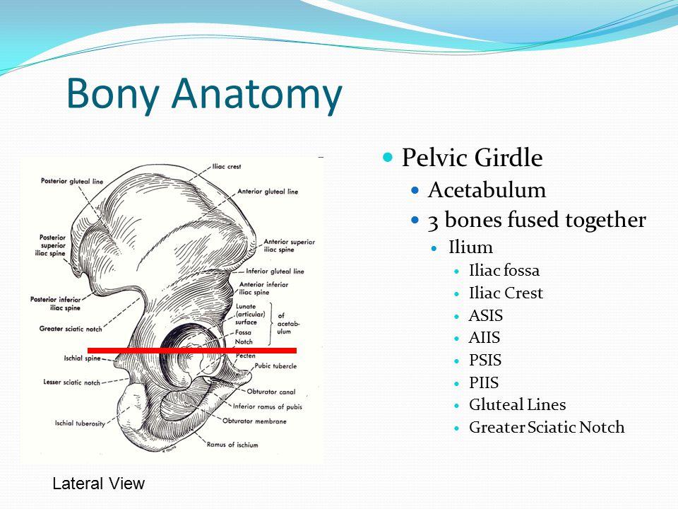 Pelvic bony anatomy