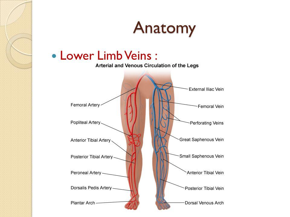 Veins of lower limb anatomy 7289652 - follow4more.info