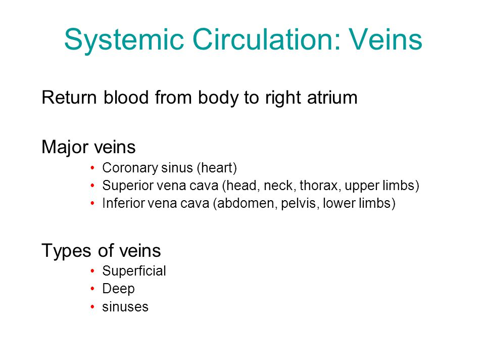 Systemic Circulation: Veins