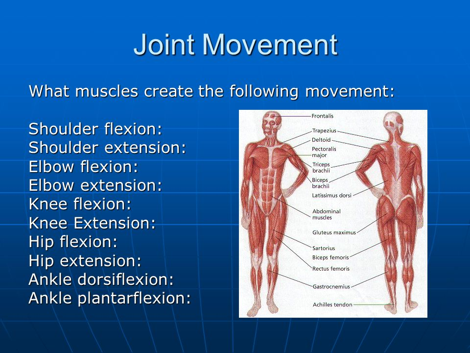 2.2 Anatomy and Biomechanics - ppt video online download