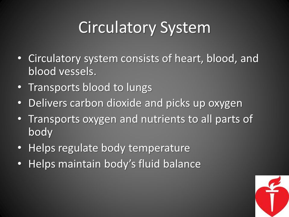 Circulatory System Circulatory system consists of heart, blood, and blood vessels. Transports blood to lungs.