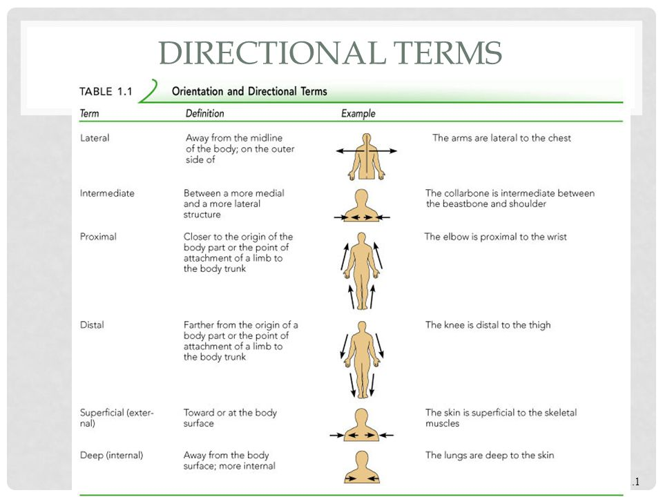 directional essay example If should look for a good process essay sample to come up with quite an interesting and original academic paper  this means that you're writing a directional.