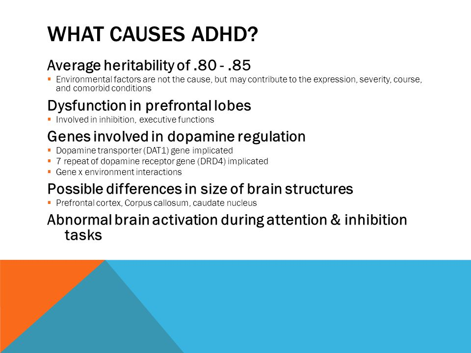 the pathophysiology of adhd Stimulant therapy is the most commonly used treatment for attention-deficit disorder/ hyperactivity disorder, also known as adhd stimulants are an effective way of managing adhd symptoms such as short attention span, impulsive behavior, and hyperactivity they may be used alone or in combination.