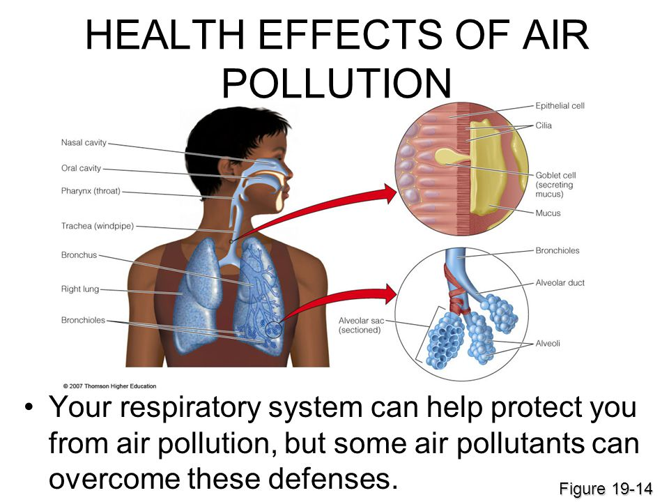 hazardous effects of air pollutants to the human body Key facts mercury is a naturally occurring element that is found in air, water and soil exposure to mercury - even small amounts - may cause serious health problems, and is a threat to the development of the child in utero and early in life.