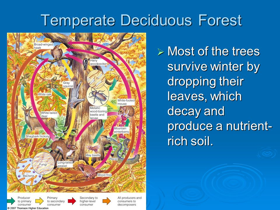 the climate and human activities in deciduous forests On jul 23, 2014, lindsay m dreiss (and others) published the chapter: forests: temperate evergreen and deciduous in the book: encyclopedia of natural resources vol i.