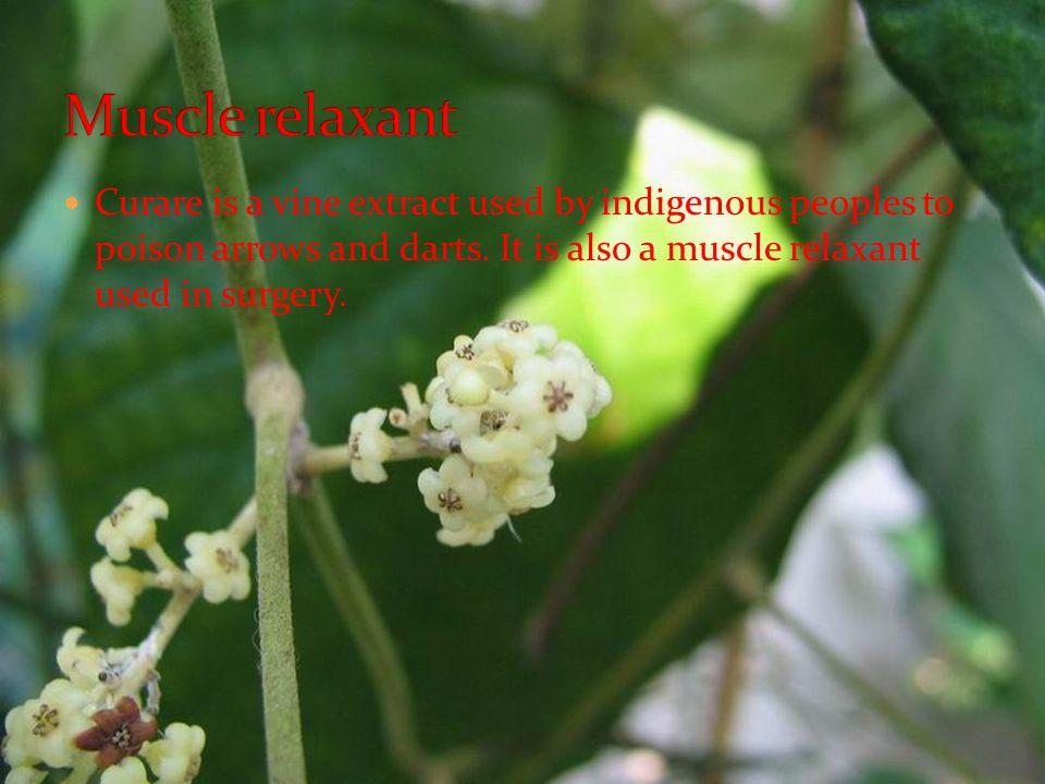 Curare Plant