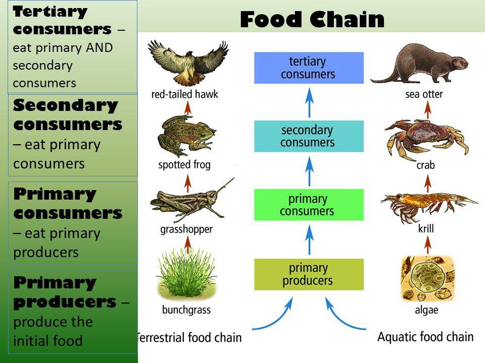 Tertiary Consumer Animals Examples