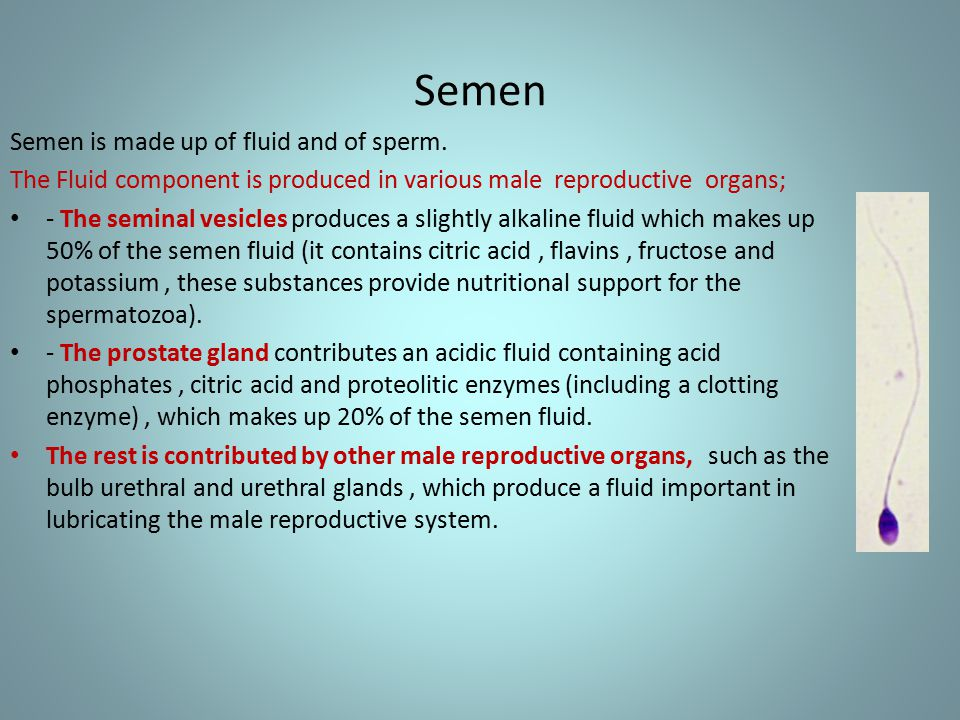 What is sperm made of about still