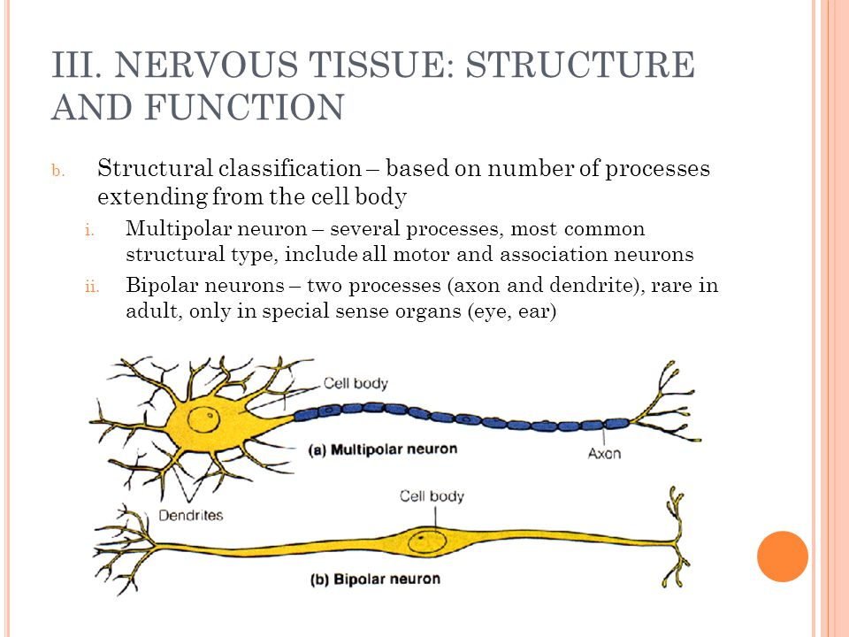 structure plus purpose with neurons essaytyper