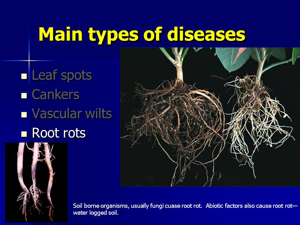 Plant pathology 101 master gardener training ppt video for Soil borne diseases