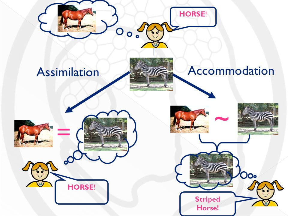 assimilation or accommodation Answer to which is more prevalent in younger children, assimilation or accommodation how about in adults.