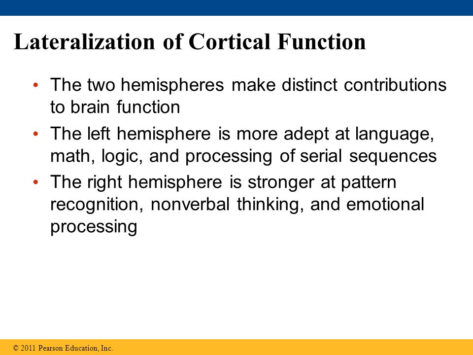 cerebral lateralization and function Either spoken or written lateralization is referred to as the localization of  functions in the brain, commonly attributed to its left hemisphere and right  hemisphere.
