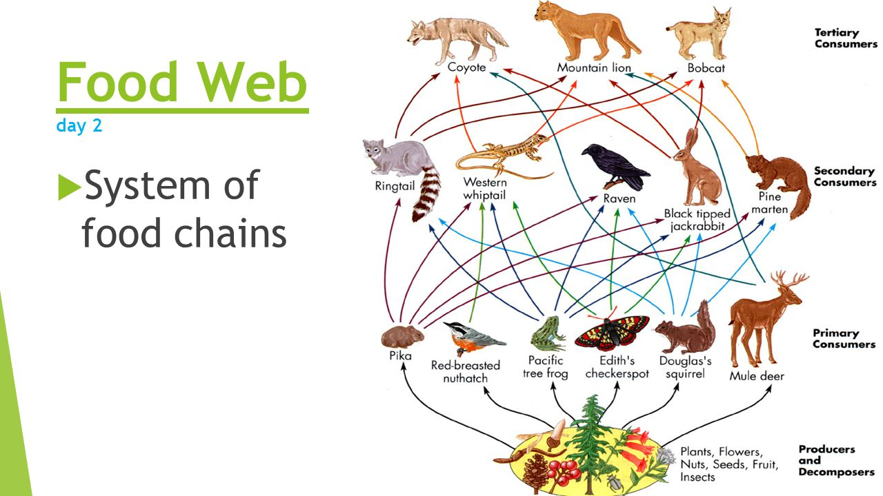 food web What is a food web a food web is a diagram of the links among species in an ecosystem – essentially who eats what.