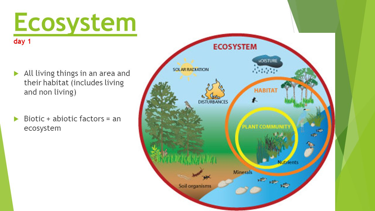 biotic eco system Start studying abiotic biotic factors learn vocabulary, terms, and more with flashcards, games, and other study tools.