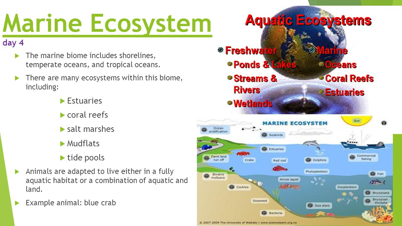 Key vocabulary 5th grade team time ppt video online download for Ecosystem pool