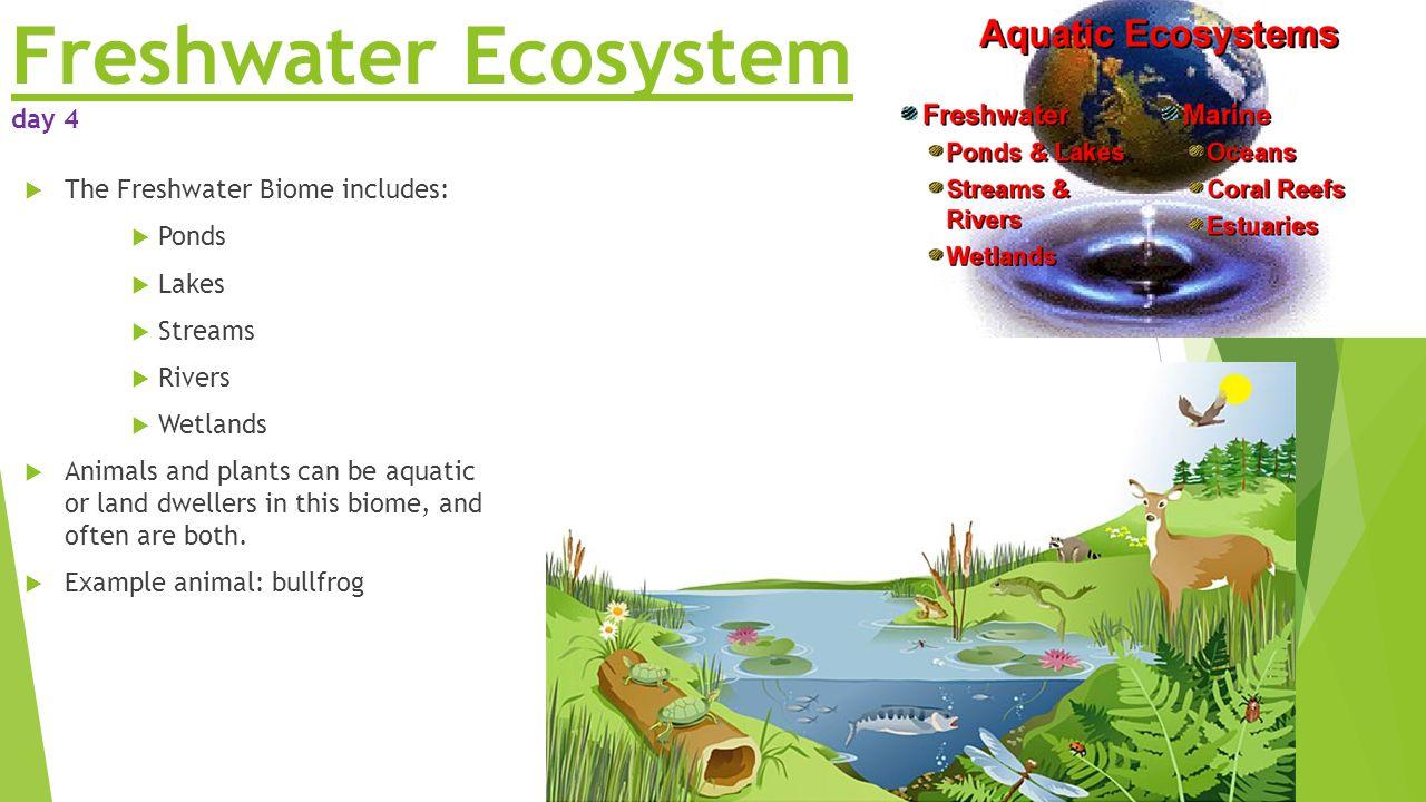 Freshwater Aquatic Ecosystem Homework Help