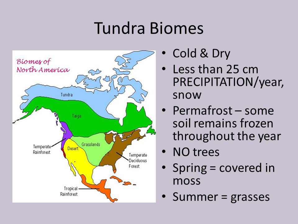 Tundra Biomes Cold & Dry Less than 25 cm PRECIPITATION/year, snow