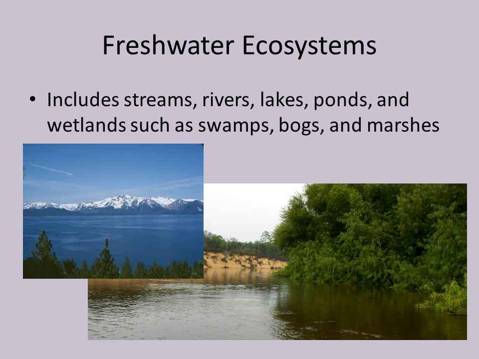 the characteristics of the streams lakes ponds and swamps types of freshwater biomes The aquatic biome is the largest on earth it is made up of two categories, freshwater and marine, and each supports different types of plant life aquatic biomes cover nearly 75 percent of the earth's surface, with freshwater biomes accounting for less than 1 percent of that total.