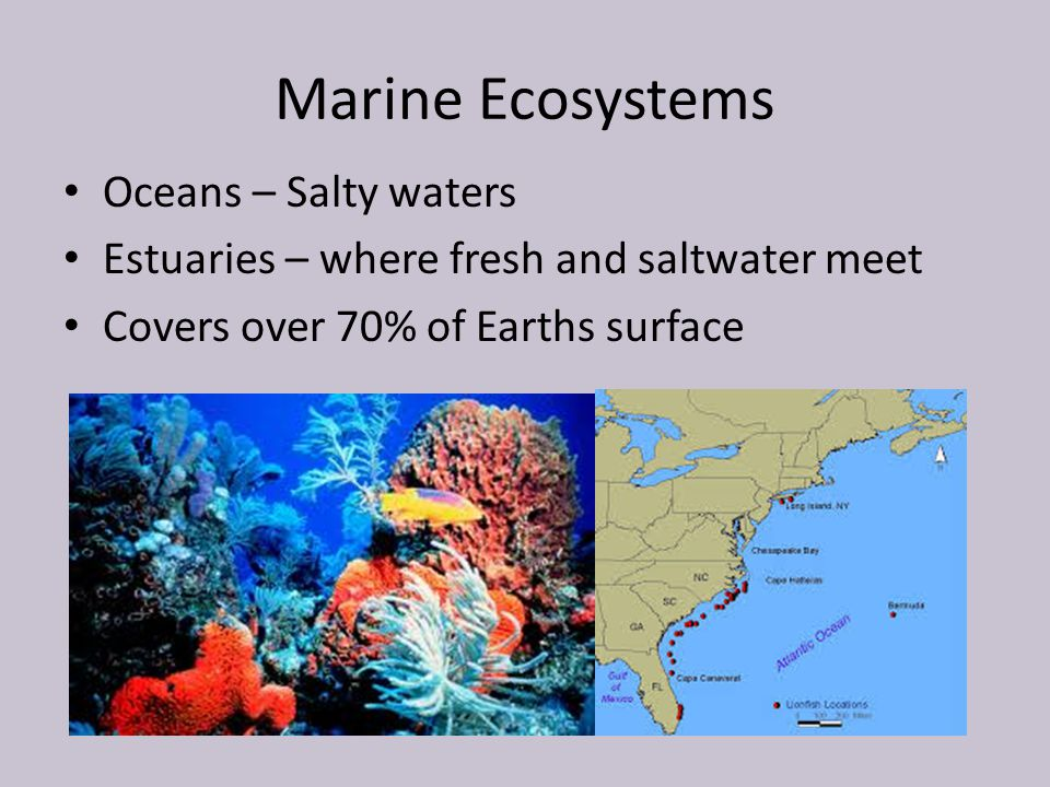Marine Ecosystems Oceans – Salty waters