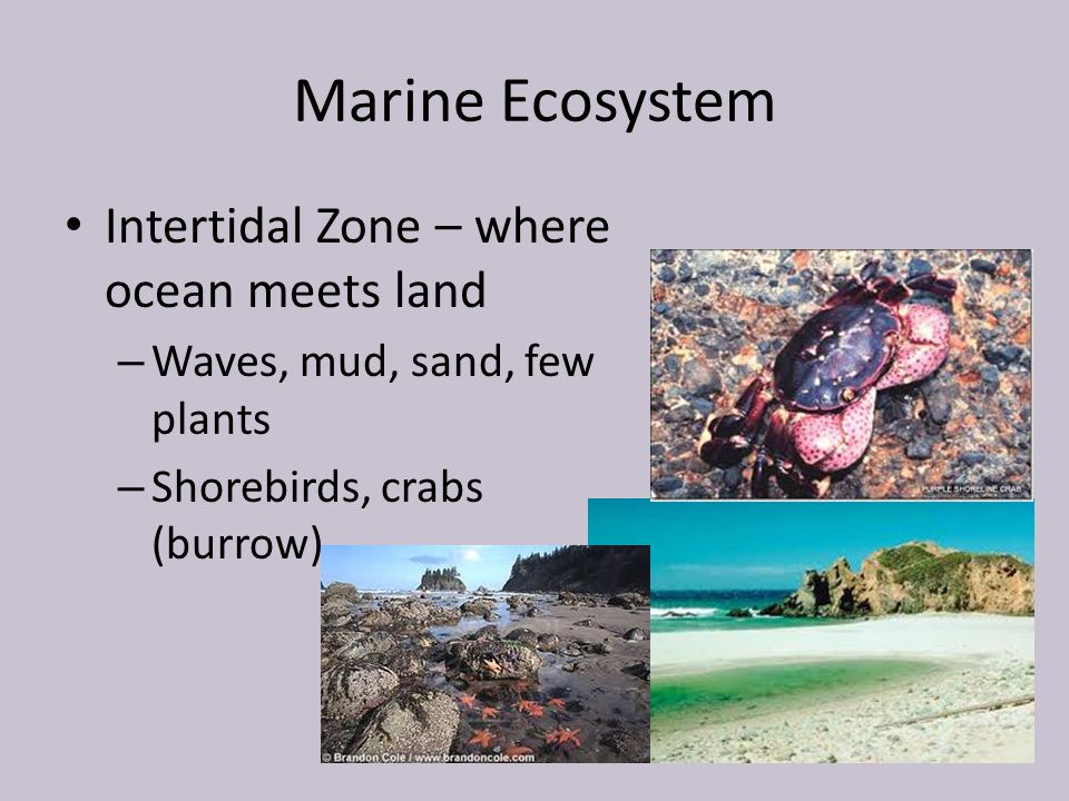 Marine Ecosystem Intertidal Zone – where ocean meets land