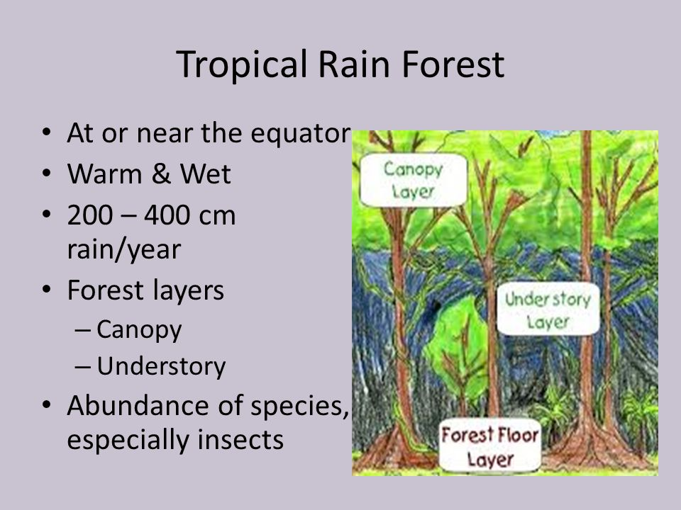 Tropical Rain Forest At or near the equator Warm & Wet