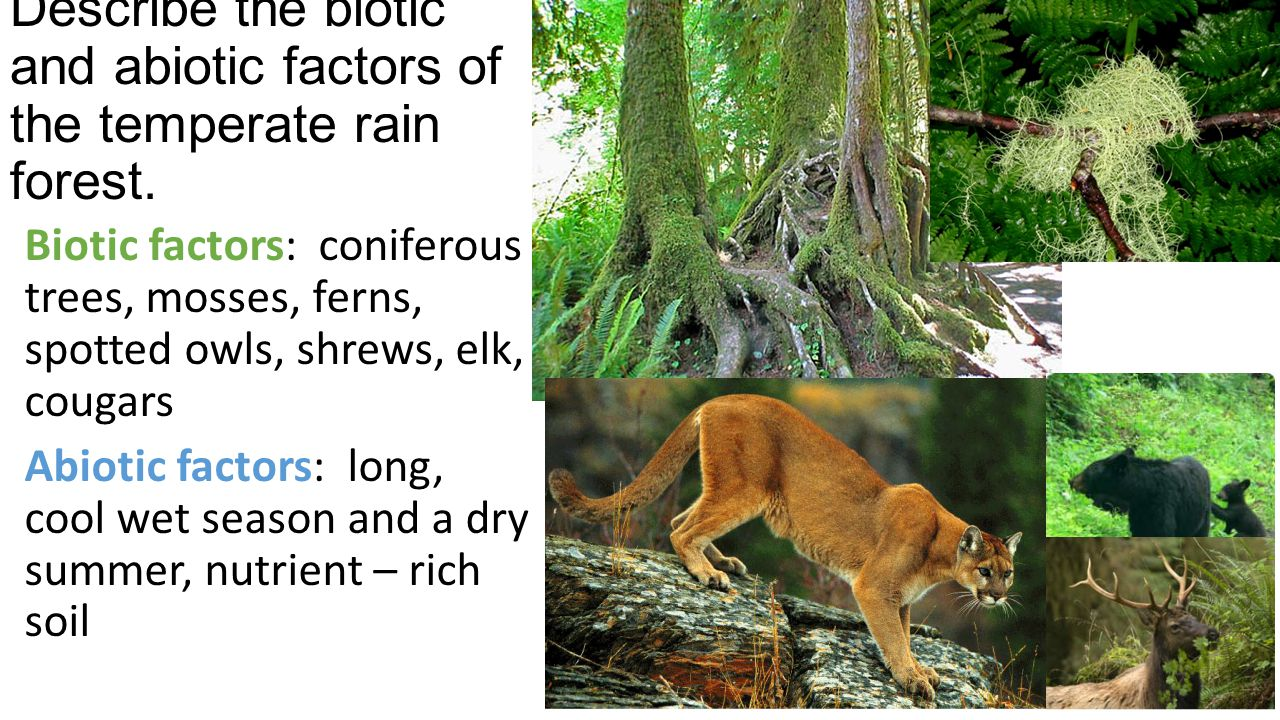 Describe the biotic and abiotic factors of the temperate rain forest.