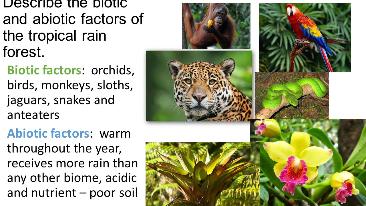 Describe the biotic and abiotic factors of the tropical rain forest.