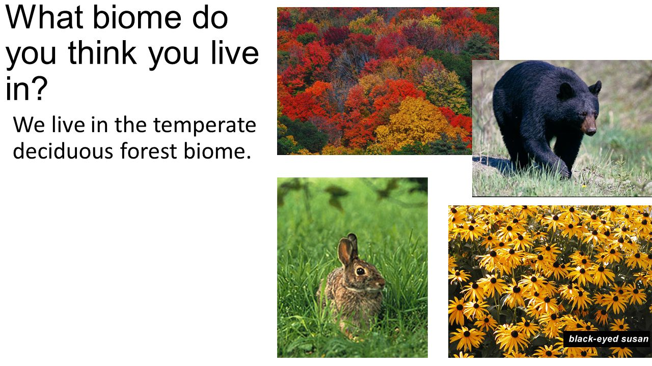 What biome do you think you live in