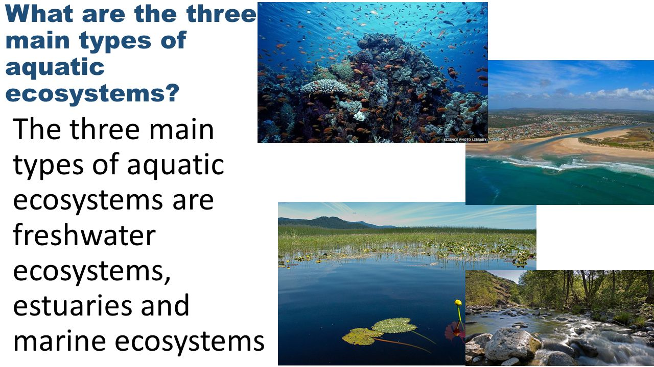 What are the three main types of aquatic ecosystems
