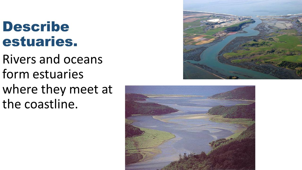 Describe estuaries. Rivers and oceans form estuaries where they meet at the coastline.