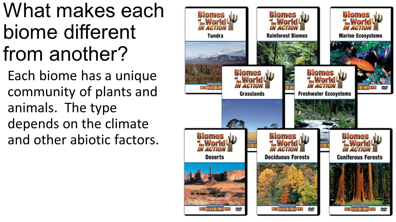 What makes each biome different from another