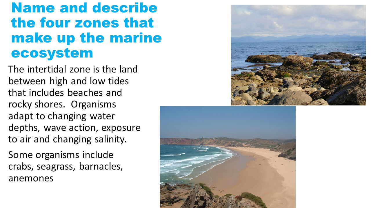 Name and describe the four zones that make up the marine ecosystem