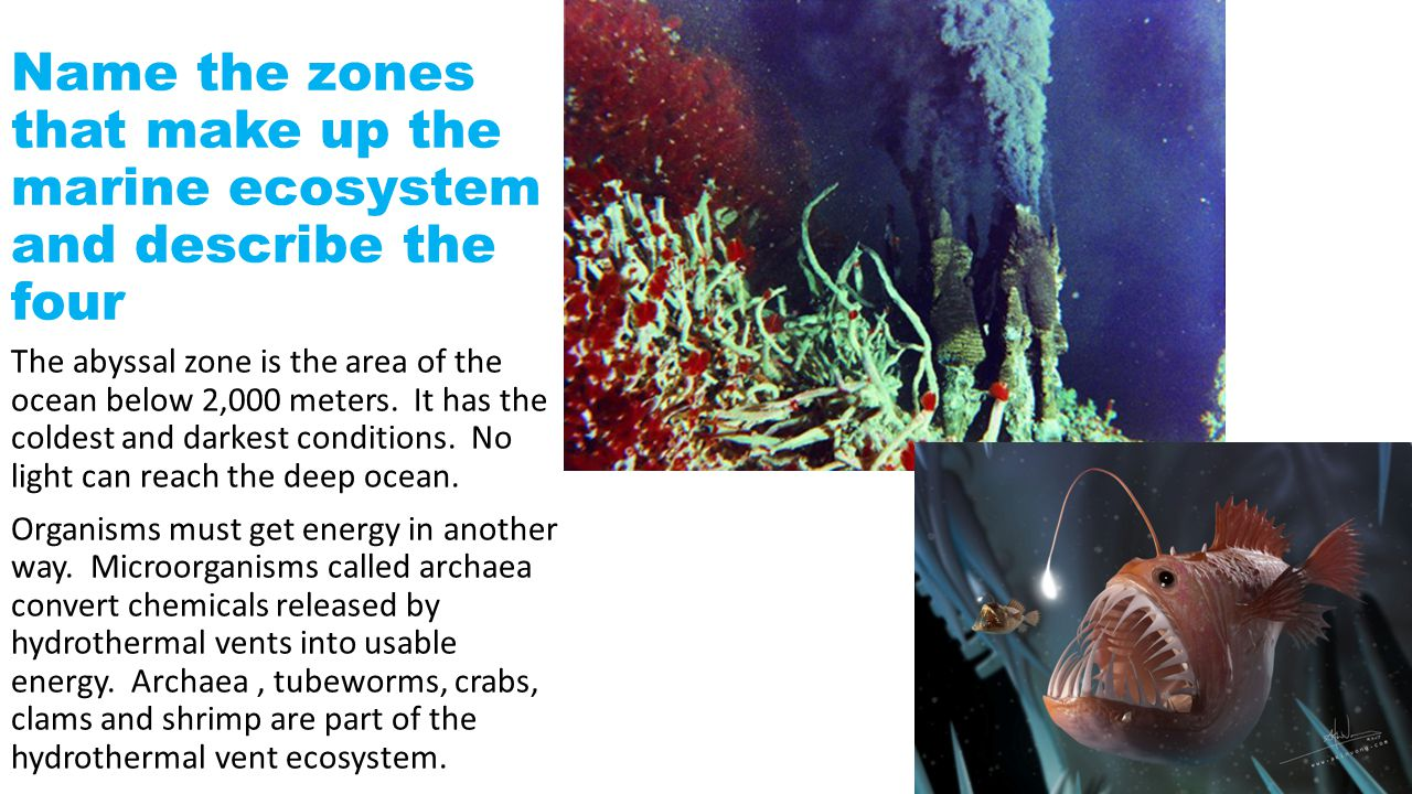 Name the zones that make up the marine ecosystem and describe the four